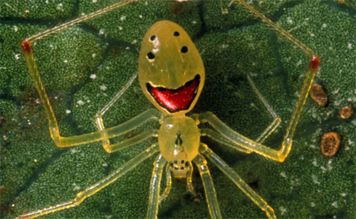 http://www.greensmilies.com/wp-content/uploads/2009/02/happy-face-spider.jpg